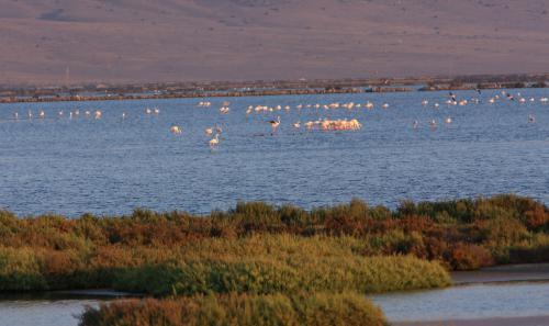 IMG 4886v Plamenaci v Salinas (Cabo de Gata)