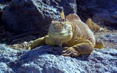 04  Las Islas Galapagos